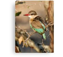 Brown Hooded Kingfisher Canvas Print