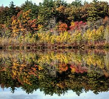 Autumn Reflections by Monica M. Scanlan