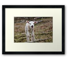 It is Spring - Welcome Little Lamb Framed Print