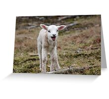 It is Spring - Welcome Little Lamb Greeting Card
