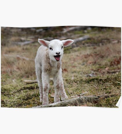 It is Spring - Welcome Little Lamb Poster