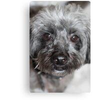 Cute Black Puppy Canvas Print