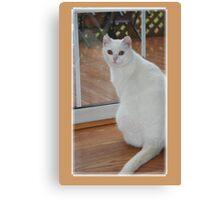 Kitty Mew Canvas Print