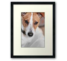 Chihuahua Cross Framed Print