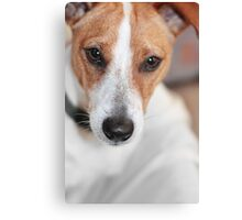 Chihuahua Cross Canvas Print