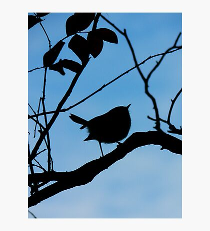 Dunoon Finch Photographic Print