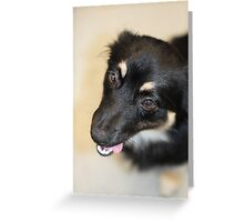Black dog Greeting Card
