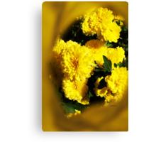 Yellow Mums Canvas Print