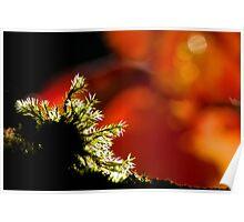 Autumn Moss Poster