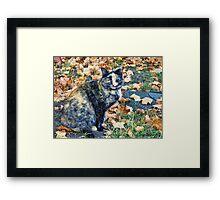 Autumn Cat Framed Print