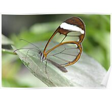 GRETA OTO  GLASSWING BUTTERFLY Poster