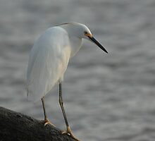 fishing by kathy s gillentine