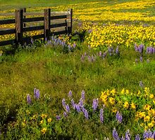 Wildflower meadow In the Columbia Gorge by Zigzagmtart