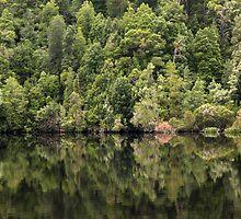 Gordon River Reflections by gabbylawson