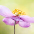 Anemone dream by Mandy Disher