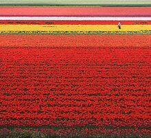 Tulip time by gabbylawson