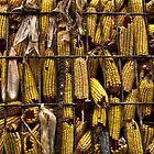 Corn by martinilogic