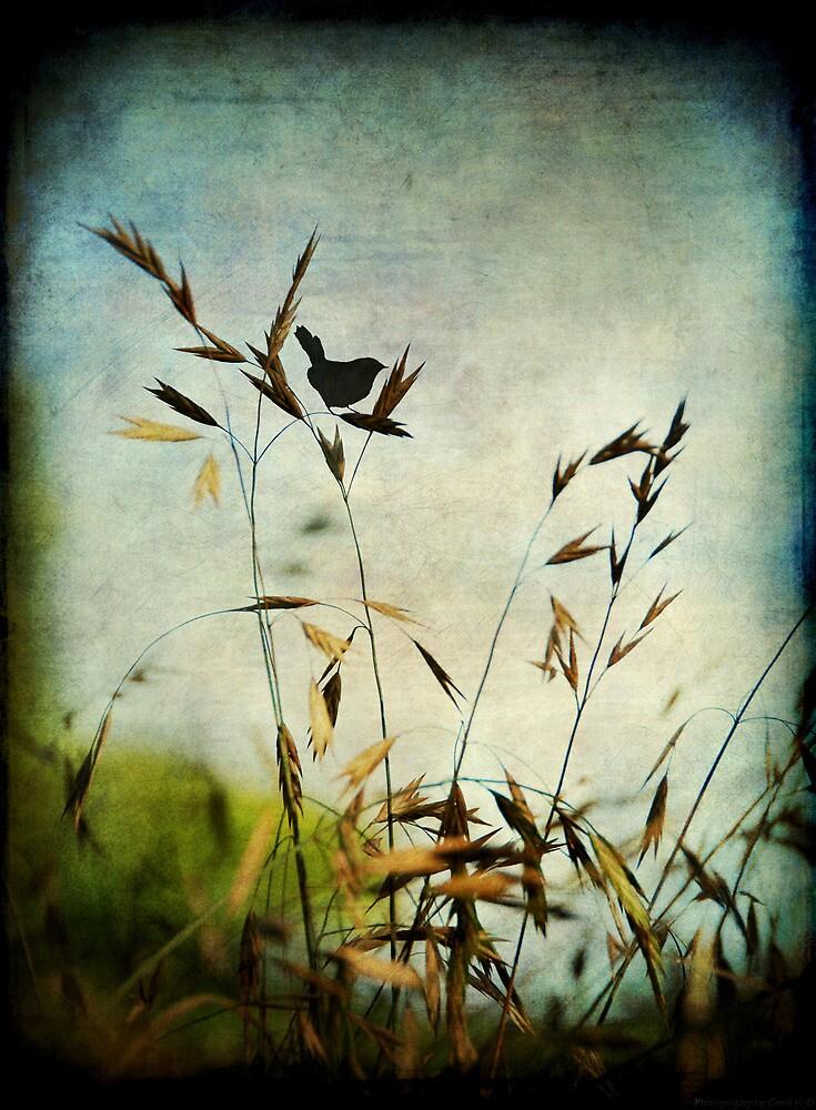 Solitary... by Carol Knudsen