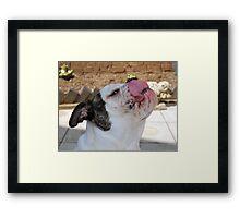 Bulldog Framed Print