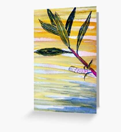Salix Daphnoides Greeting Card
