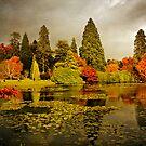 Autumn colours, Sheffield Park by Rachael Talibart
