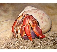 Hermit Crab Drawing Photographic Print