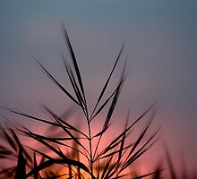 Grass by MuzzaPhotog