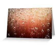 summer light  Greeting Card