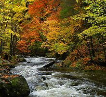Smoky Mountain River by Marylee Pope