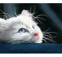 Blue-Eyed Kitten Drawing Photographic Print