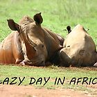A Lazy Day in Africa! by Debbie Schiff