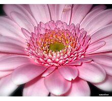 Ice Pink! Photographic Print