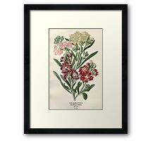Favourite flowers of garden and greenhouse Edward Step 1896 1897 Volume 1 0075 Ten Week Stock Framed Print