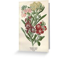 Favourite flowers of garden and greenhouse Edward Step 1896 1897 Volume 1 0075 Ten Week Stock Greeting Card