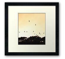 A flock of birds flying over the sunset Framed Print
