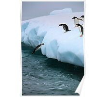 Gentoo penguins going for fishing Poster