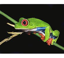 Red-Eyed Tree Frog Drawing Photographic Print