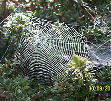 Sunlit Spider Web by rullo