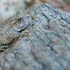 Canyon Treefrog by Kimberly P-Chadwick