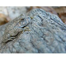 Canyon Treefrog Photographic Print