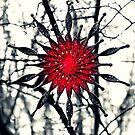 Starry Christmas by Josephine Pugh
