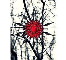 Starry Christmas Photographic Print