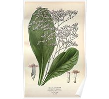 Favourite flowers of garden and greenhouse Edward Step 1896 1897 Volume 3 0047 Sea Lavender Poster