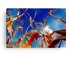 Corn Stalk Canvas Print
