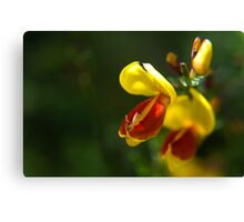 Bright isn't just clever Canvas Print