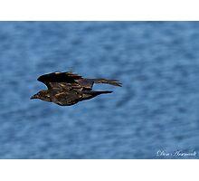 Black Bird against Blue Water Photographic Print