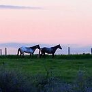 Horses by George Cousins