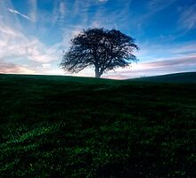 The Lone Tree by Paulo Nuno