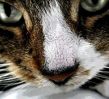 Close-up Tabby by Laura Ward