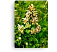 Pretty Plant Canvas Print